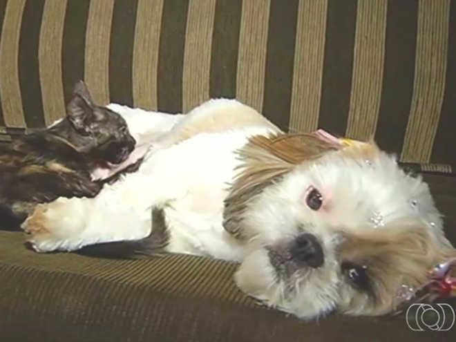Cadela 'adota' e até amamenta gata resgatada durante ataque de cão