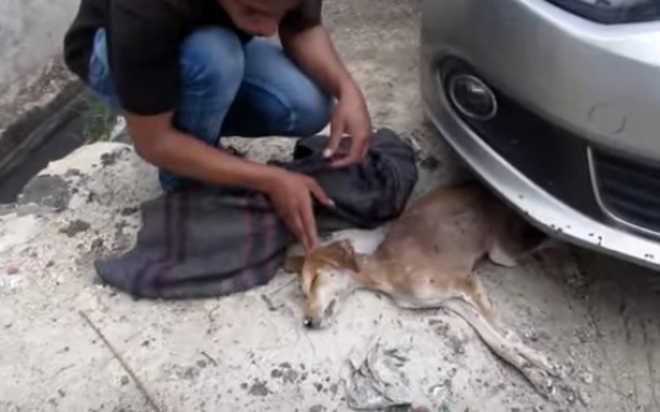 Todo mundo achou que este cão estava morto, mas isso não impediu que resgatistas dedicados o ajudassem