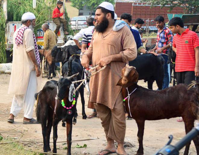 Comunidade muçulmana celebrou o Festival Eid com bolo em formato de bode, em vez de abater o animal