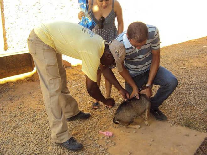 Campanha antirrábica deve vacinar 54 mil animais em Montes Claros, MG