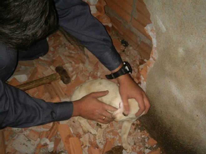 Bombeiros de Araguari (MG) resgatam cadela presa entre muro e parede