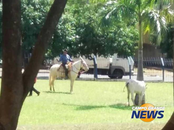 Vaca invade hospital, assusta funcionários e é capturada por laçador em Campo Grande, MS