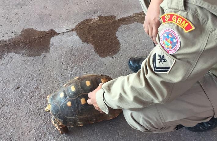 Ação de turista salva tartaruga pantaneira de ser atropelada na BR 262
