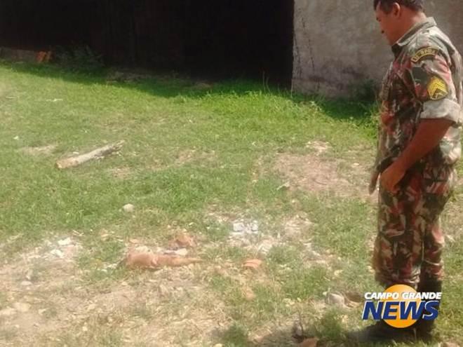 Homem é preso e multado por matar e esquartejar cachorro em Corumbá, MS