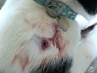 Gato é ferido por tiro enquanto brincava e caso para na polícia em Coxim, MS