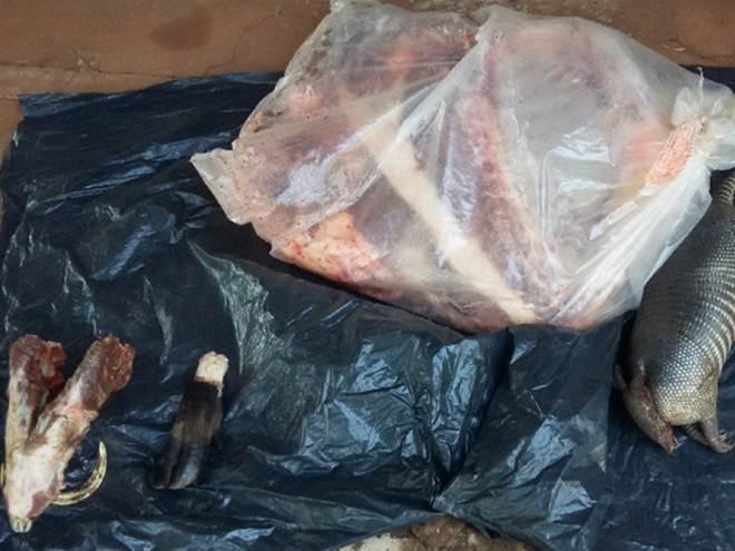 Caçador é multado por usar cachorro para abater tatu e porco silvestre em MS
