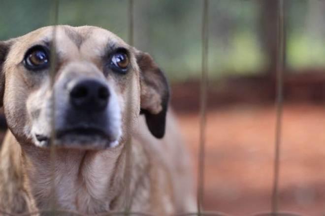 TCE organiza campanha de doação de ração e medicamentos para ajudar associação protetora de animais em MT