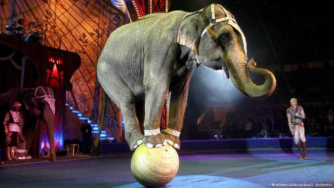 Noruega proíbe elefantes nos circos