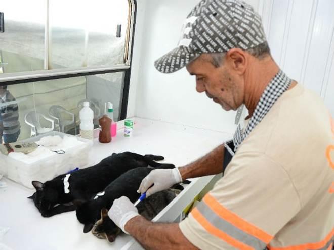 CCZ promove mutirão de castração de cães e gatos no distrito de Outeiro