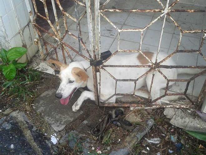 Bombeiros resgatam cão que ficou preso na grade de casa em Olinda, PE
