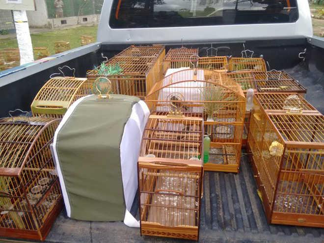 Operação apreende 32 aves silvestres em Camaragibe, no Grande Recife, PE