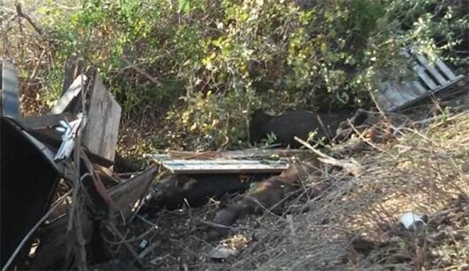 Carreta carregada de gado tomba na BR-343, próximo a Buriti dos Lopes