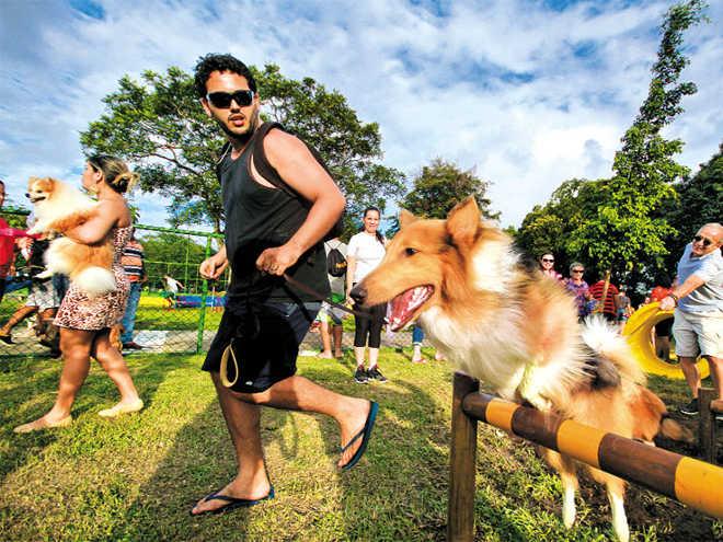 Ativistas pedem mais áreas de lazer para cães no Recife, PE