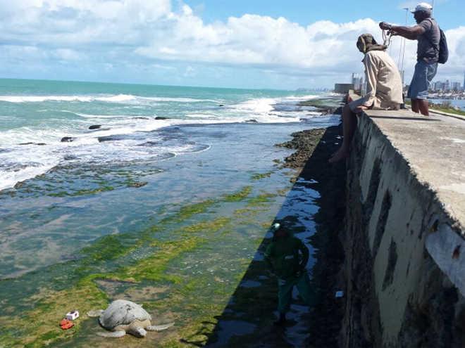 Tartaruga aparece morta com características de atropelamento por barco, no Recife, PE