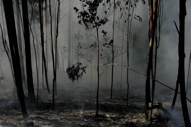 Portugal: Câmara de Monchique ensina a salvar os patudos das chamas dos incêndios