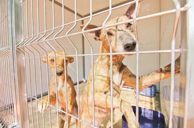 Cães resgatados de fogo em Portugal continuam sem tutor