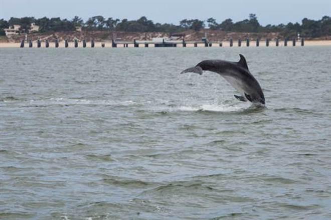 Biólogos detetam elevada concentração de mercúrio em golfinhos portugueses