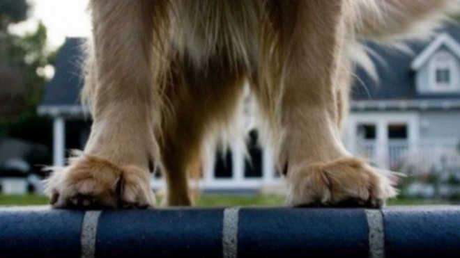 Portugal: Três cães morrem com veneno em jardim público