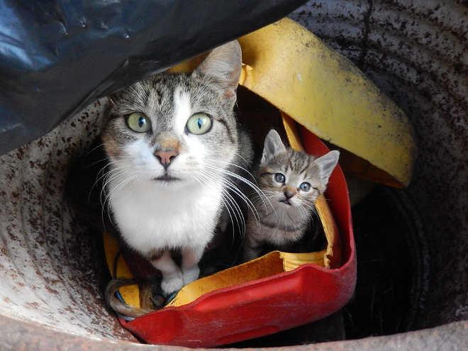 ONG abre loja solidária para conseguir ajudar mais animais em Portugal