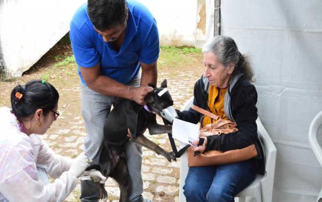 Programa de castração começou nesta semana em Petrópolis, RJ