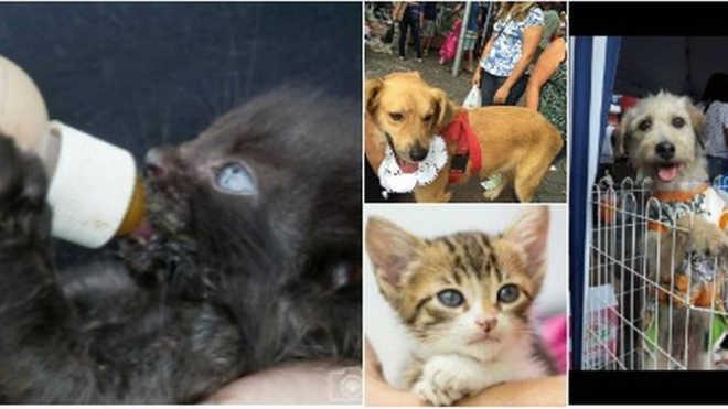 Voluntárias acolhem animais de rua, no Rio de Janeiro, e fazem apelo: 'Adotem'