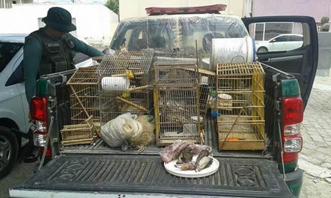 CIPAM flagra crime ambiental e resgata animais silvestres em Acari, RN