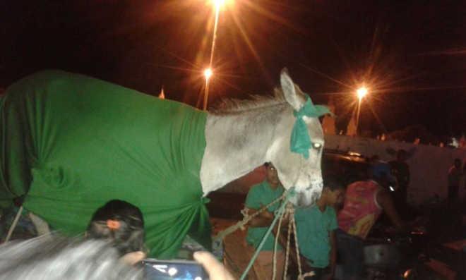 Moradores denunciam maus-tratos a animais durante movimento político em São Tomé, RN