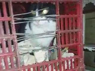 Homem mantinha 28 gatos presos dentro da sua casa