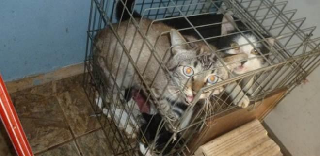 Lei que proíbe quem comete maus-tratos de ter animais é sancionada em SP
