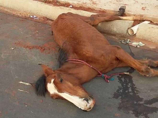 Cavalo é encontrado com sinais de maus-tratos em Andradina, SP