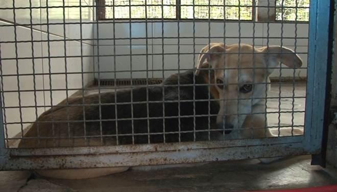 Centro de Zoonoses é opção para adoção de animais em Bertioga, SP
