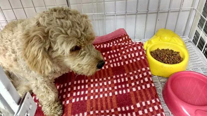 Populares se mobilizam e salvam cachorra atropelada em Franca, SP