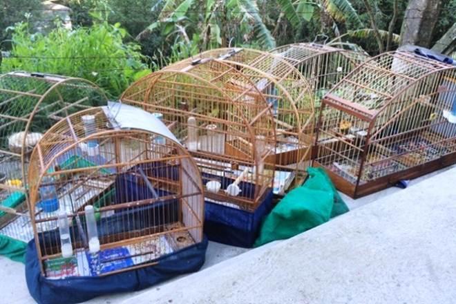 PF apreende 33 pássaros silvestres em situação irregular em São Paulo