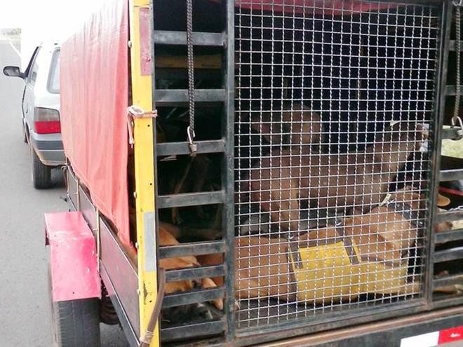 Caçador leva multa de R$ 27 mil por maus-tratos no transporte de cães