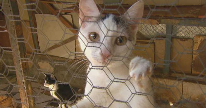 Sem emprego e com ação de despejo, soldador tenta cuidar de 70 gatos em Santa Cruz das Palmeiras, SP
