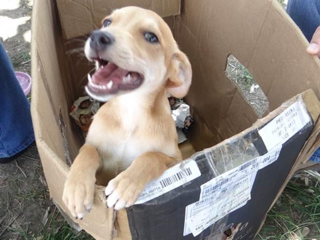 São Vicente (SP) fará feira gratuita para adoção de animais neste sábado