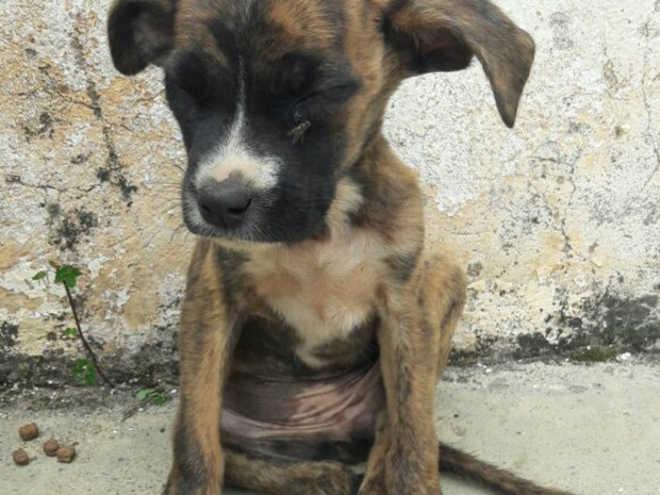 Polícia encontra 7 cachorros mortos em casa abandonada de São Pedro, SP