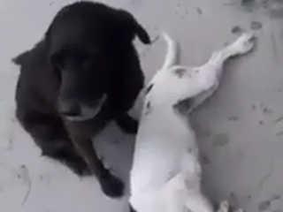 Vídeo: Cão não sai do lado do companheiro que morreu atropelado e comove internautas em SP
