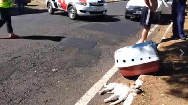 Motociclista atropela cão e Prefeitura de Franca (SP) nega atender animal
