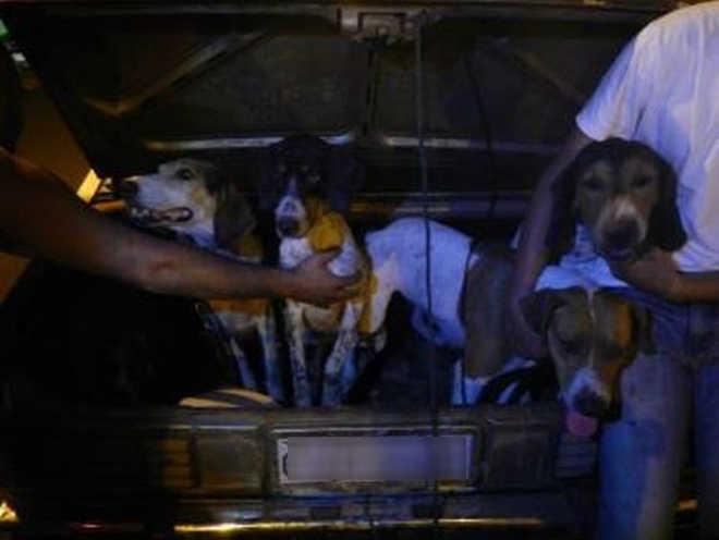Grupo é multado em R$ 393 mil por usar cães na caça de capivaras