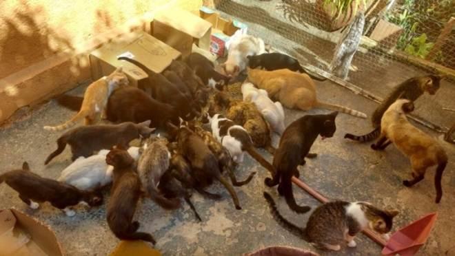 Leis de proteção animal não animam defensores dos bichinhos