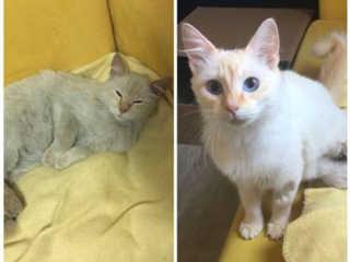 """ONG Catland adere ao """"lar temporário"""" para aumentar a qualidade de vida dos seus gatos em São Paulo"""