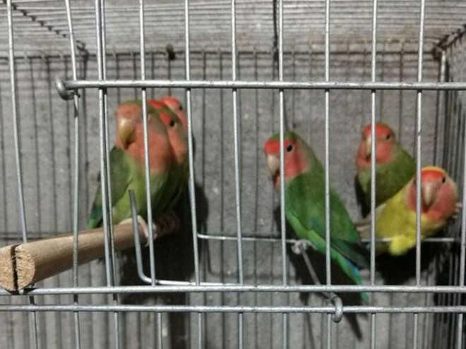 PF apreende 33 aves silvestres em ação contra tráfico de animais em São Paulo