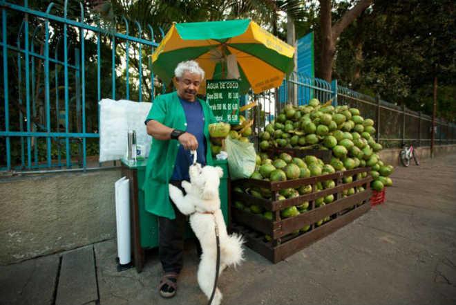 Vendedor serve água de coco para cães que vão à sua barraca