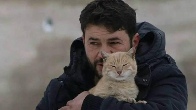 Homem deixa de fugir de guerra na Síria para proteger os gatos que ficaram para trás