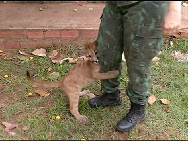 Animais ameaçados de extinção são resgatados e se recuperam em Araguaína, TO