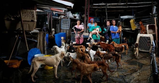 Com dificuldades para alimentar suas famílias, venezuelanos abandonam animais de estimação