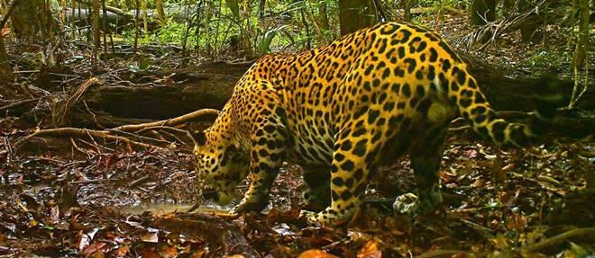 Estudo revela que 23 milhões de animais foram mortos na Amazônia