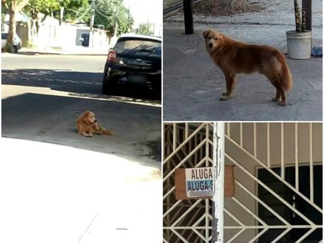 Cão foi encontrado abandonado em frente de casa em Macapá (Foto: Gabrielle Nascimento/Arquivo Pessoal)