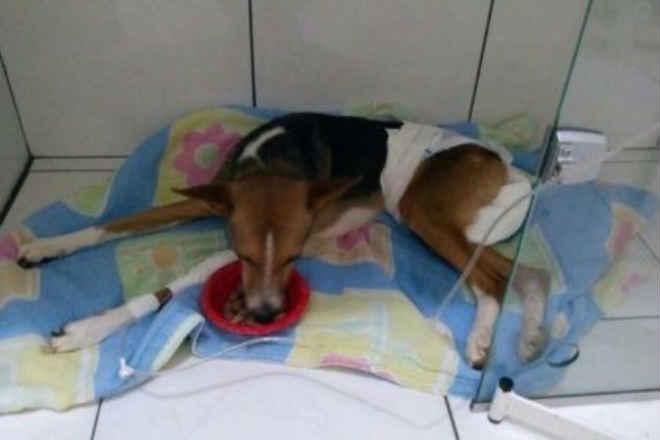 Cachorro vítima de estupro faleceu nesta terça em Vitória da Conquista, BA